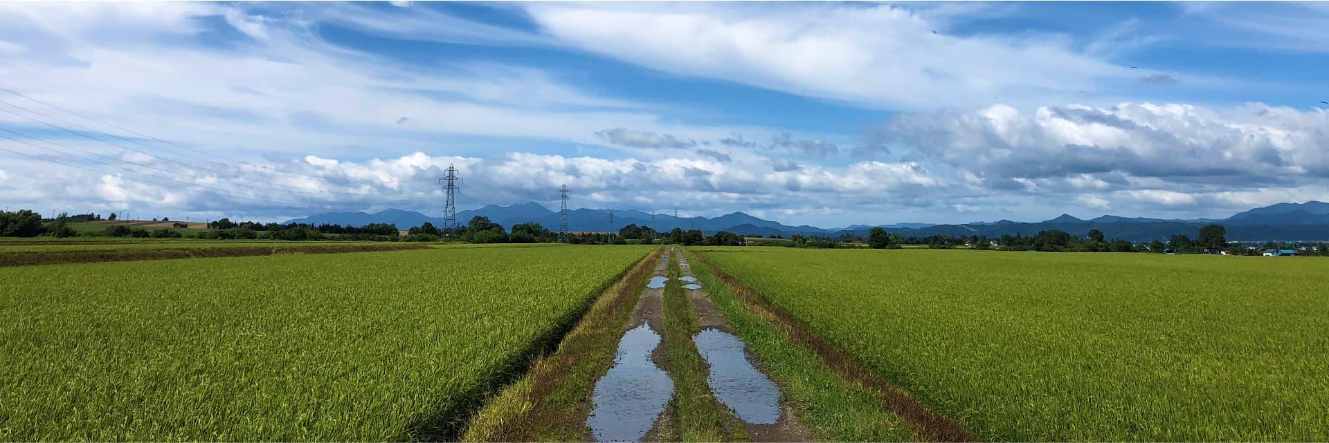 せがわ農園の風景