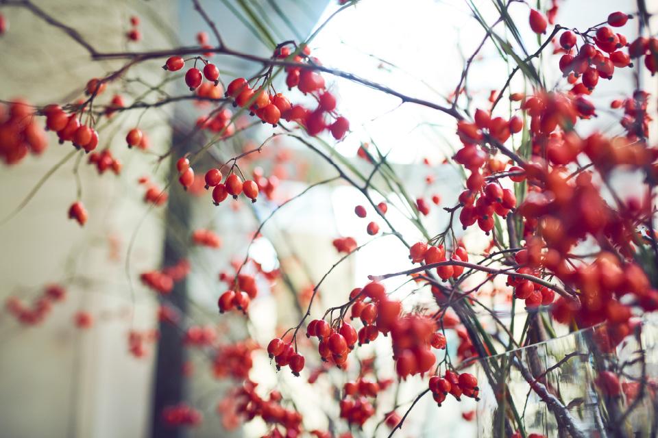 秋を知らせる赤い実
